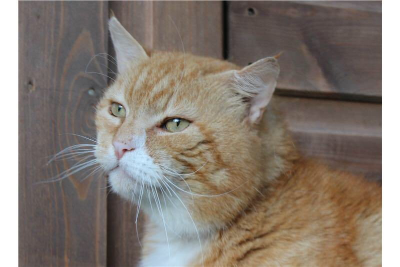 Doddy is still looking for a new home this #friyay. This gorgeous 10yr old boy is desperate for a place to call his own, with people to love him. Please #AdoptDontShop today!<br>http://pic.twitter.com/bCOBG0KUGU