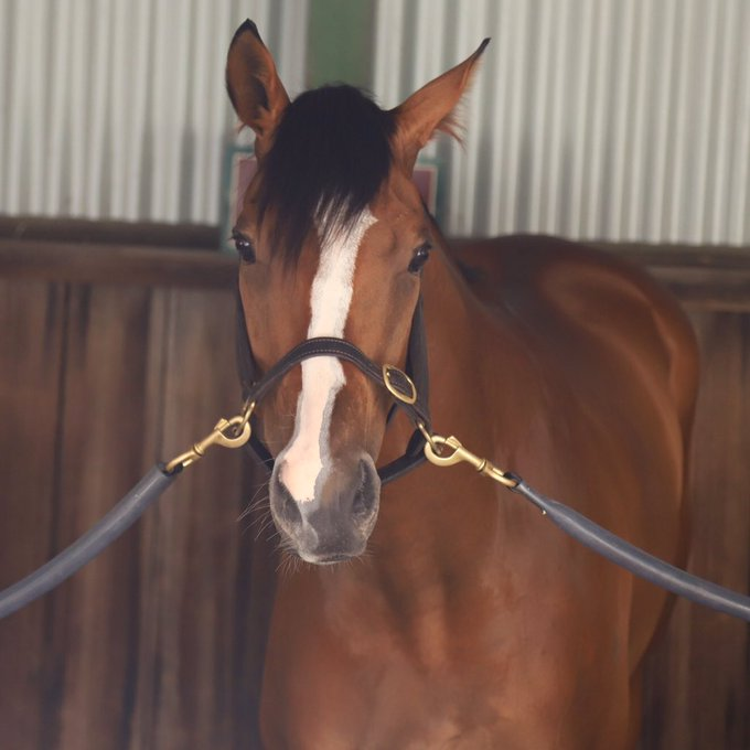 Hartnell just keeps fighting, another solid performance from the 8yo, what a hearty horse. Watch it again here - Photo