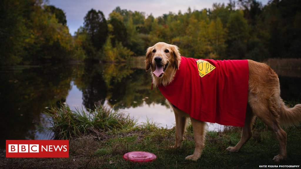 Bucket list for Finn, the Vermont dog dying of cancer   https://t.co/SL140fe156 https://t.co/u2XGBMjXC3