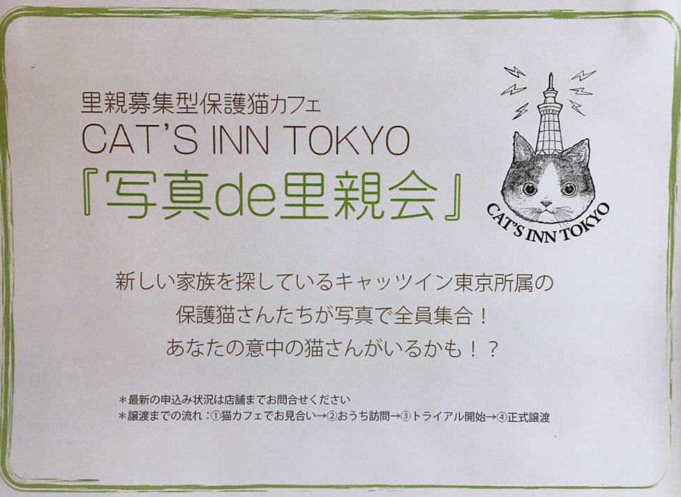 Cat S Inn Tokyo