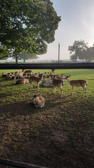 Good #SaturdayMorning to you from our team and #deer. Have a great weekend. Photo