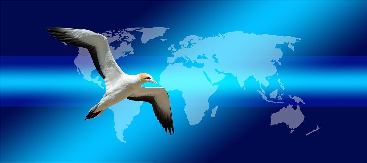 #WorldMigratoryBirdDay - taking our #LawEnforcement training on why #animalcrime matters to countries that need our help. Want to partner with us ? <br>http://pic.twitter.com/y7NJC86RkS