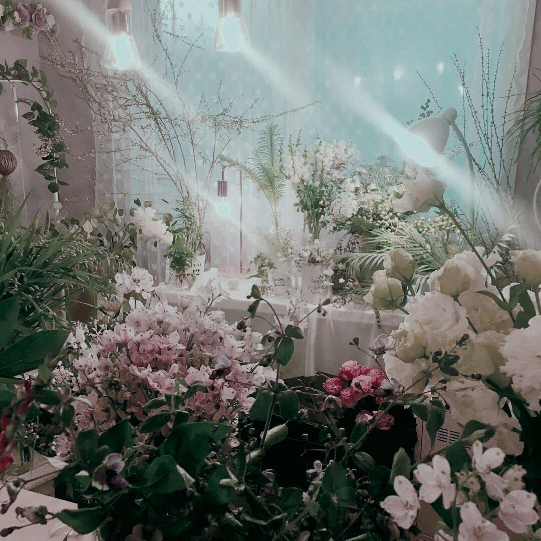 download Le Ginseng: Vertus thérapeutiques d\'une plante