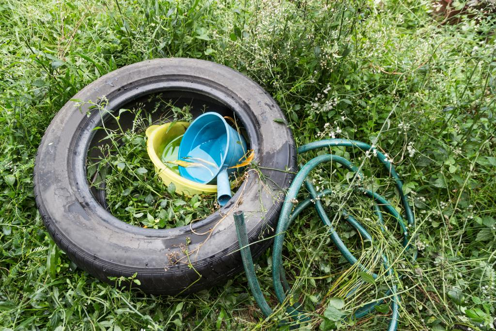 Tire and bucket filled with standing water