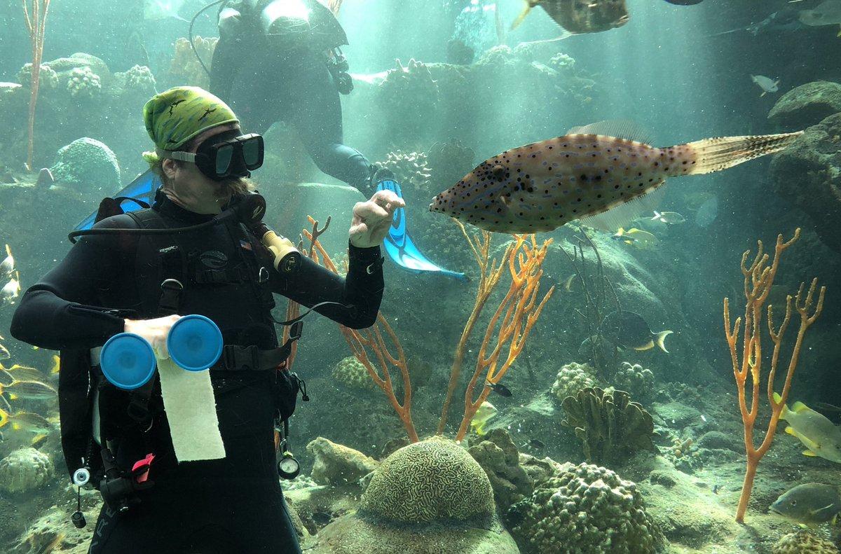 The Florida Aquarium   Visit St Petersburg Clearwater Florida