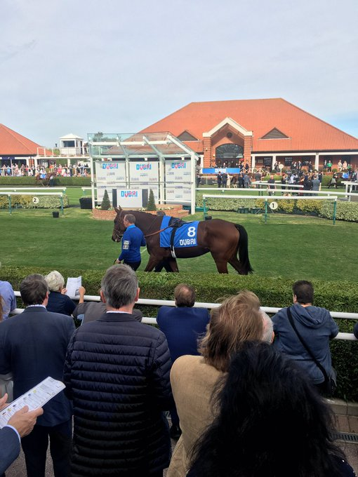 A wonderful day's racing at Newmarket with some special young horses on show. Especially looking forward to seeing Persian King next season - he's a tall type who looks every inch a Group 1 horse in the making. 🏇 Photo