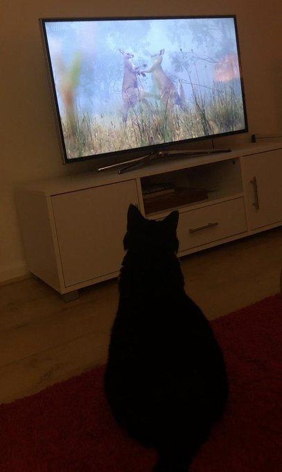 So this is #Caturday style tv! #SaturdayThoughts @SirDavidBBC @BBCFOUR Photo