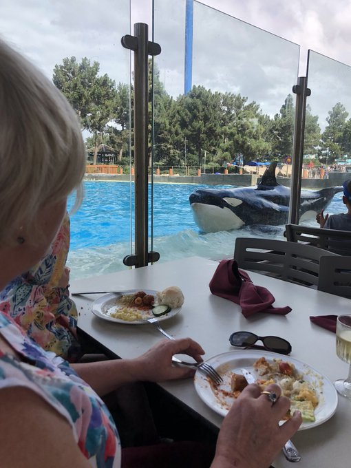 Happy Birthday Mum! Surprise lunch with a Orca to celebrate