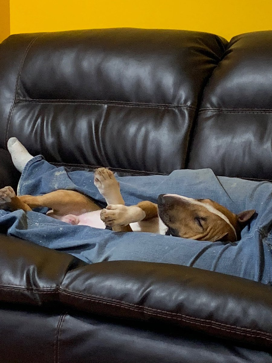 They fell asleep on a cold Saturday, afternoon #bullterrier <br>http://pic.twitter.com/8ZoraxhVKg