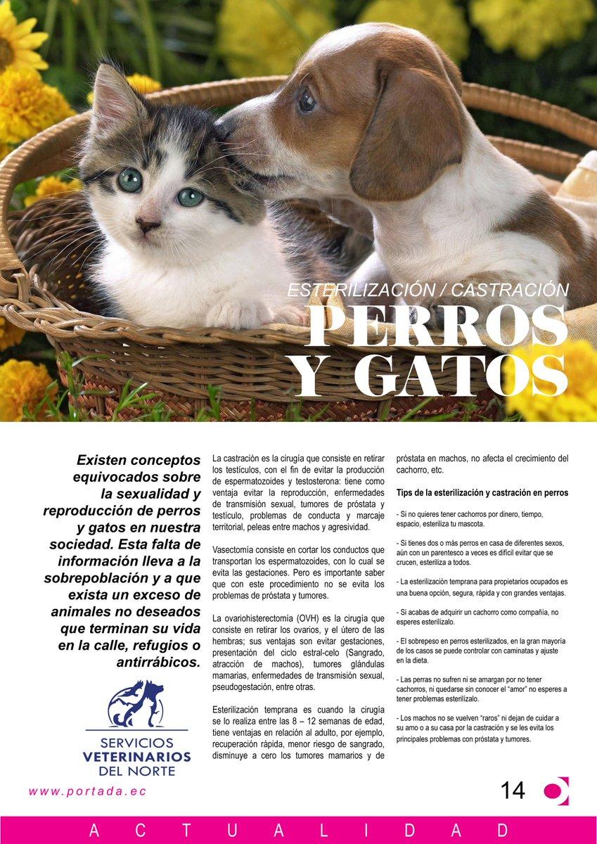 los gatos machos pueden tener problemas de próstata