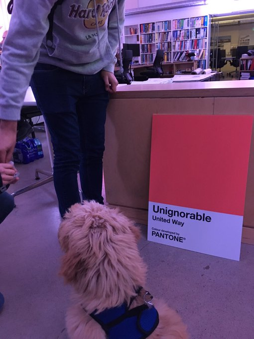 They say dogs are colourblind, but it seems even dogs can see #UNIGNORABLE is something special. Come see for yourself! #NocHFX18 Photo