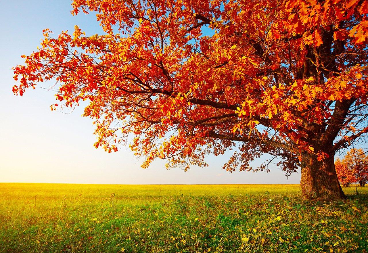 Осень картинки в хорошем качестве, веселые картинки картинки