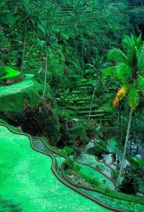 The Ubud Area Has fabulous Rice Terraces  #Indonesia  #amazingplace<br>http://pic.twitter.com/g9PU6aM1TR
