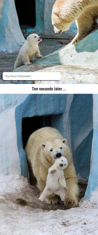 Funny Memes On Twitter Srsfunnydisrespectful Polar Bear Memes