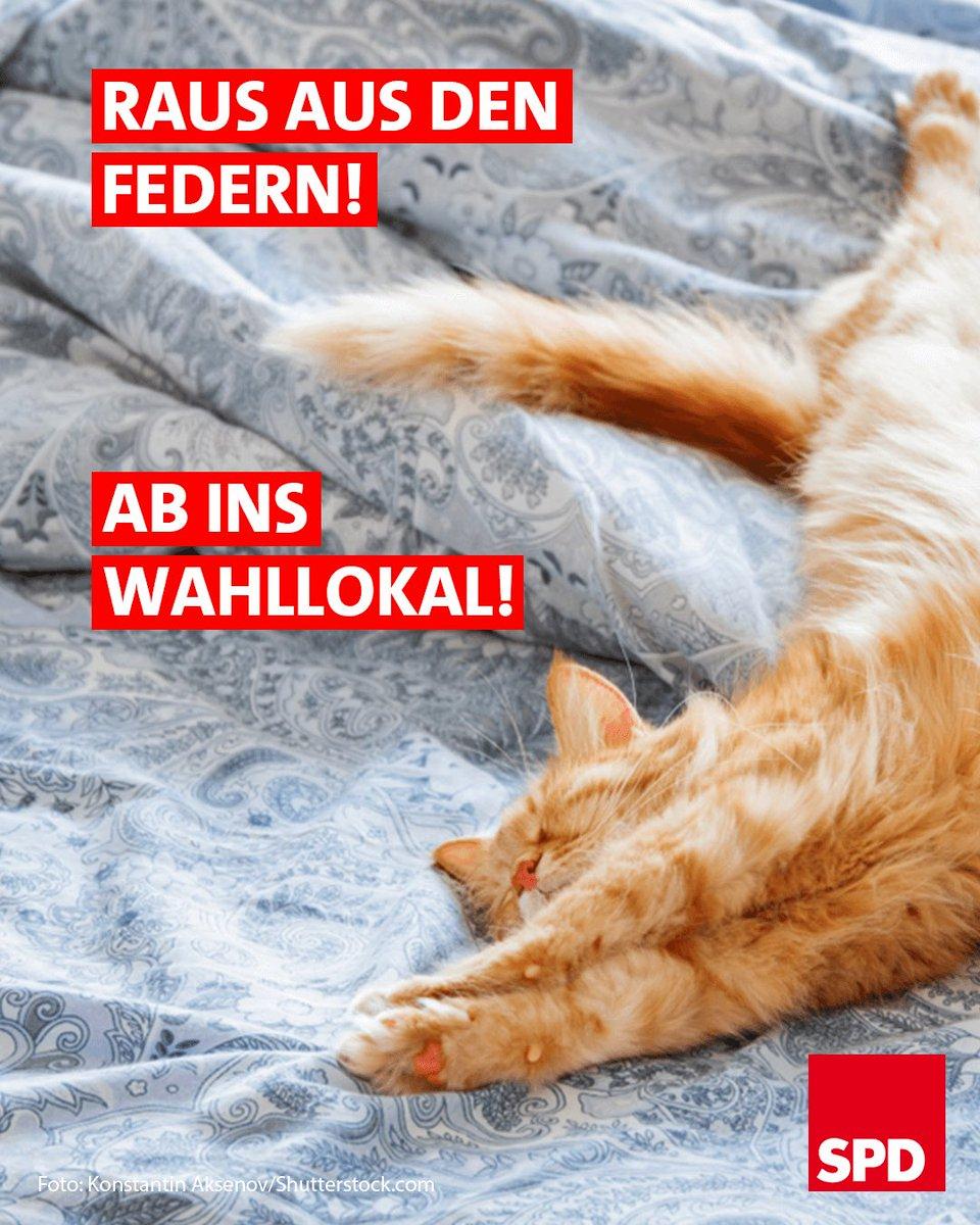 Heute wird in Bayern gewählt - und Du kannst mit Deiner Stimme was bewegen 🗳 ! Also: erst frühstücken ☕️, dann @BayernSPD und @NataschaKohnen wählen 💪! #ltwby18