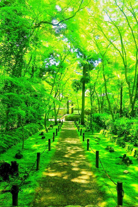 地蔵院(京都)