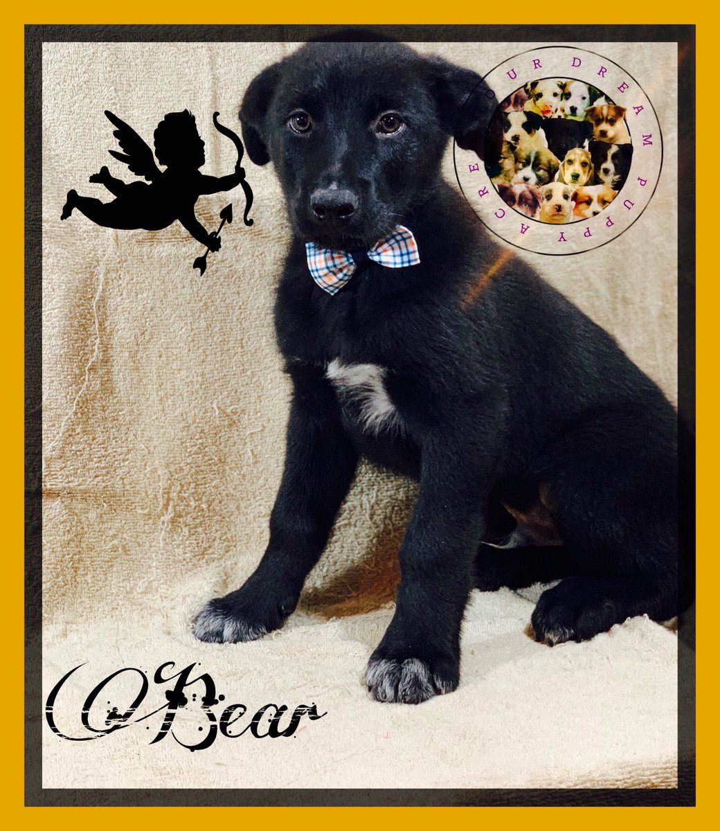 Your Dream Puppy Acres At Yourdreampuppy Twitter