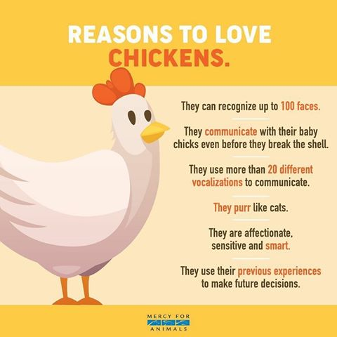 #Love #Chickens #Animals #Anipals  #GoVegan #Vegans #BeKindToAnimals  ❤️🐥 Did YOU know? I didn't but do now!  . https://t.co/cUwtAmjvK8