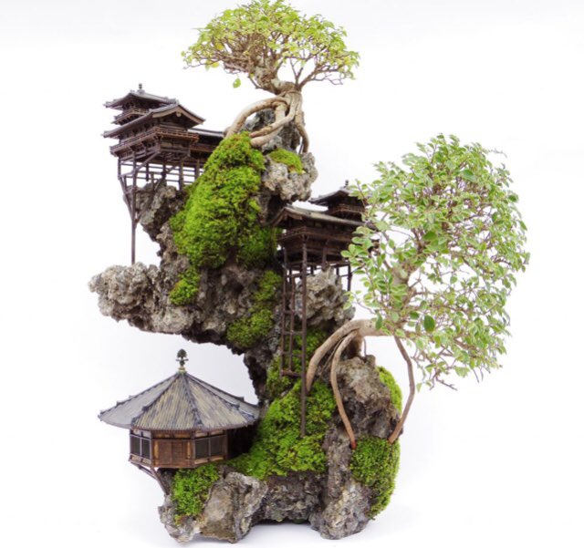 Allie Oldfield On Twitter So I Ve Discovered The Coolest Bonsai Trees Https T Co Jy3giy62bt