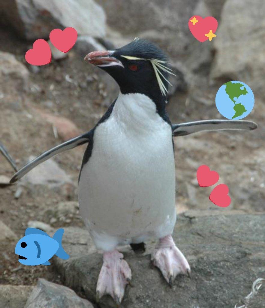 baby rockhopper penguin sounds - HD1104×1280