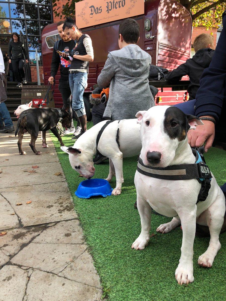 My first ever bully walk with my new bully friends!  . . . #bullterrier #bullies #glasgow #dogsofinstagram #dogsofinsta #dogsoftwitter #doggo #puppers<br>http://pic.twitter.com/jmI852Ey2P