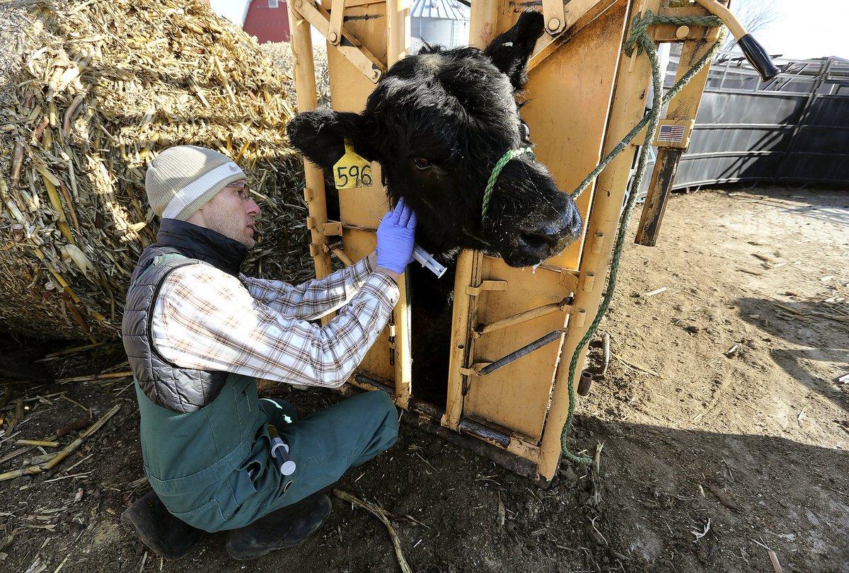 beef cattle veterinarian dr - 1199×630