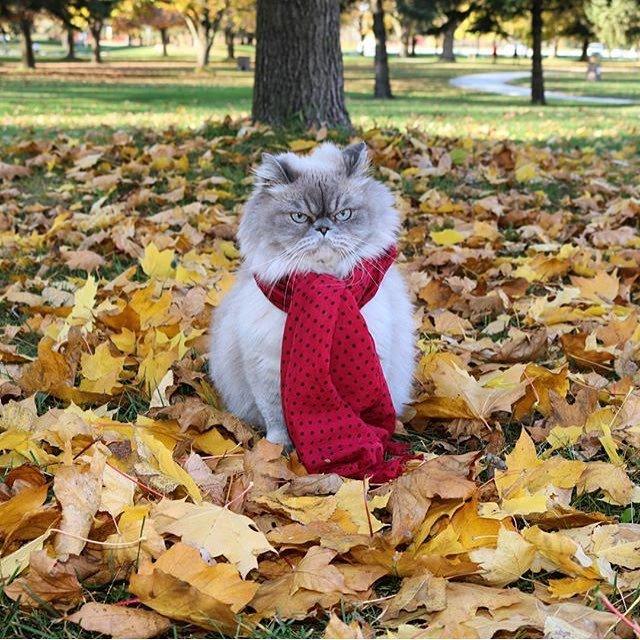 Картинки прикольные осень, добрый день