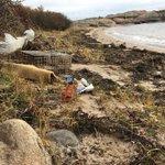Så er det på'an igjen. Her ved kyststien i Grundtvik i Onsøy har det samlet seg masse marint avfall etter de første høststormene. Viklet inn i tangrester og satt seg fast i nyperosebuskene.