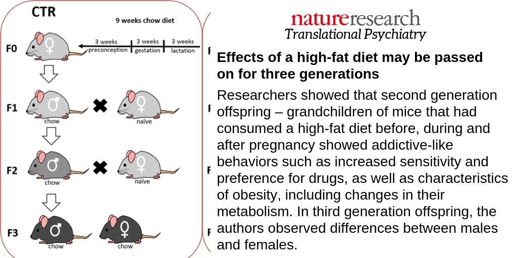 Translational Psyciatry journal pregnancy high fat diet