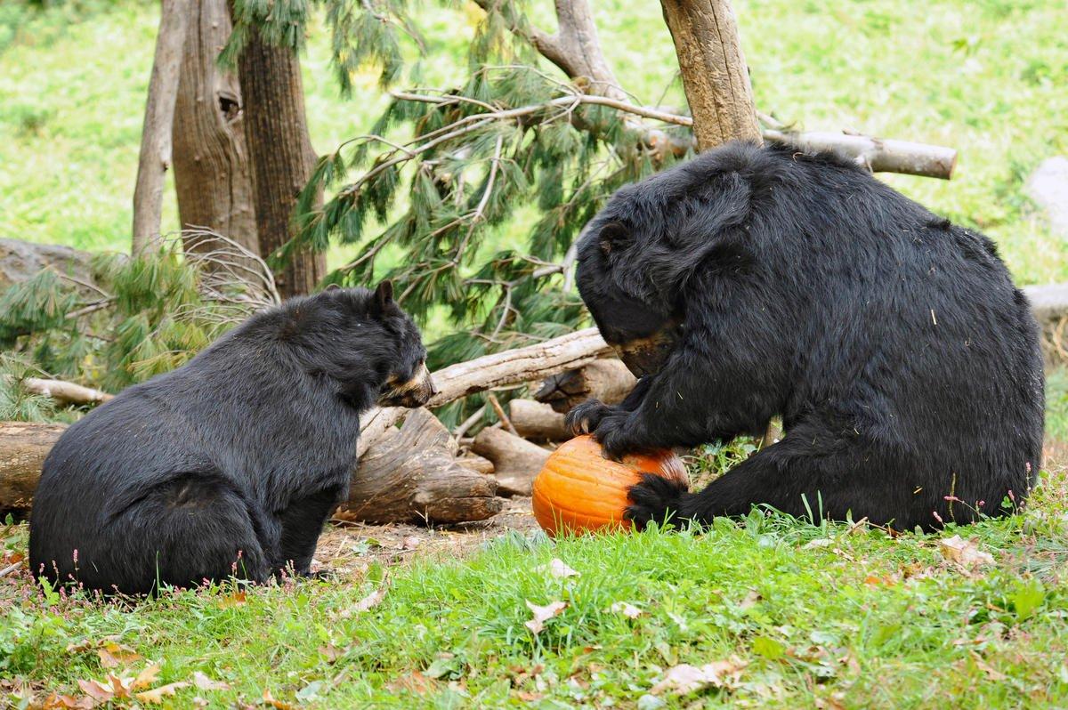 Queens Zoo on Twitter: