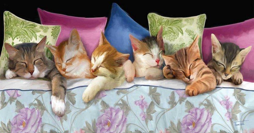 Спокойной ночи картинки с котятами и щенятами с надписями, днем