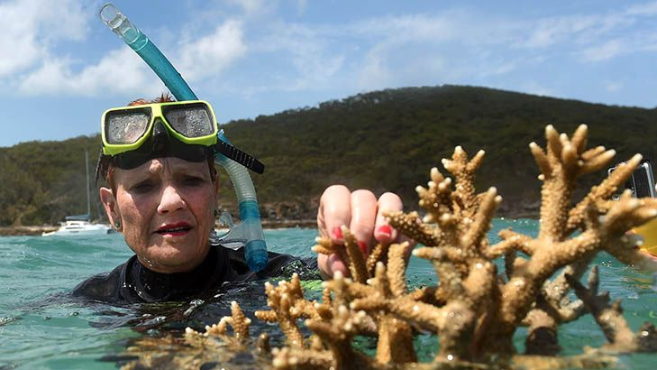 Pauline Hanson Tells Great Barrier Reef Its Ok To Be White: betootaadvocate.com/entertainment/…