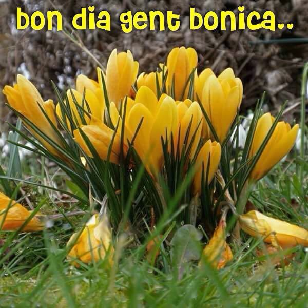 Jose Gea على تويتر Que No Las Dit Bon Dia Bon Dia Ana Que Tu Si Tel Mereixes Https T Co Fb7czbbui9