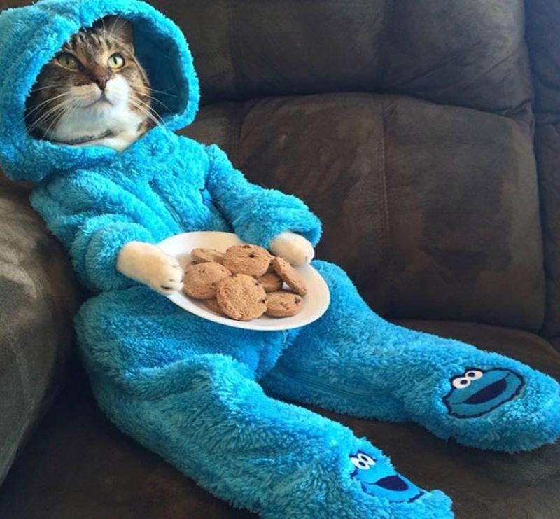 米大使館が件名「パジャマ猫パーティー」で「猫がパジャマ着てクッキー食べる画像」をEメールで一斉誤送信 パーティー開催は誤報である旨、関係者に陳謝の大事態に=豪州  https://t.co/7eZWX9a4ar
