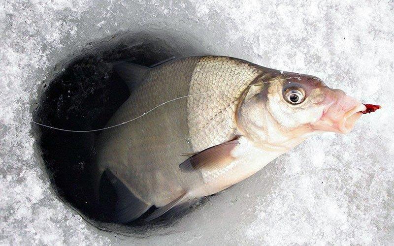 11 мест бесплатной рыбалки в Москве и Подмосковье
