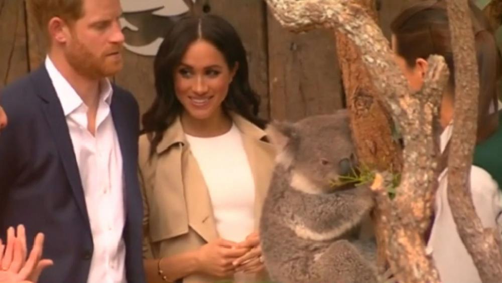 Watch: Prince Harry and Meghan meet koala in Sydney https://t.co/Fck5OckvWG