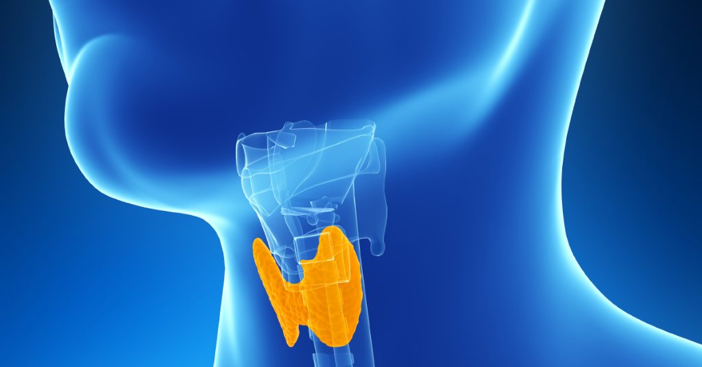 RT Did you know a sluggish thyroid can delay weight loss? If this tiny gland in the front of your throat lags on the job, you could gain as much as 5 to 10 extra pounds. https://t.co/G81XtPUEA3 https://t.co/7qnsqeo0HD #health #wellness via WebMD: