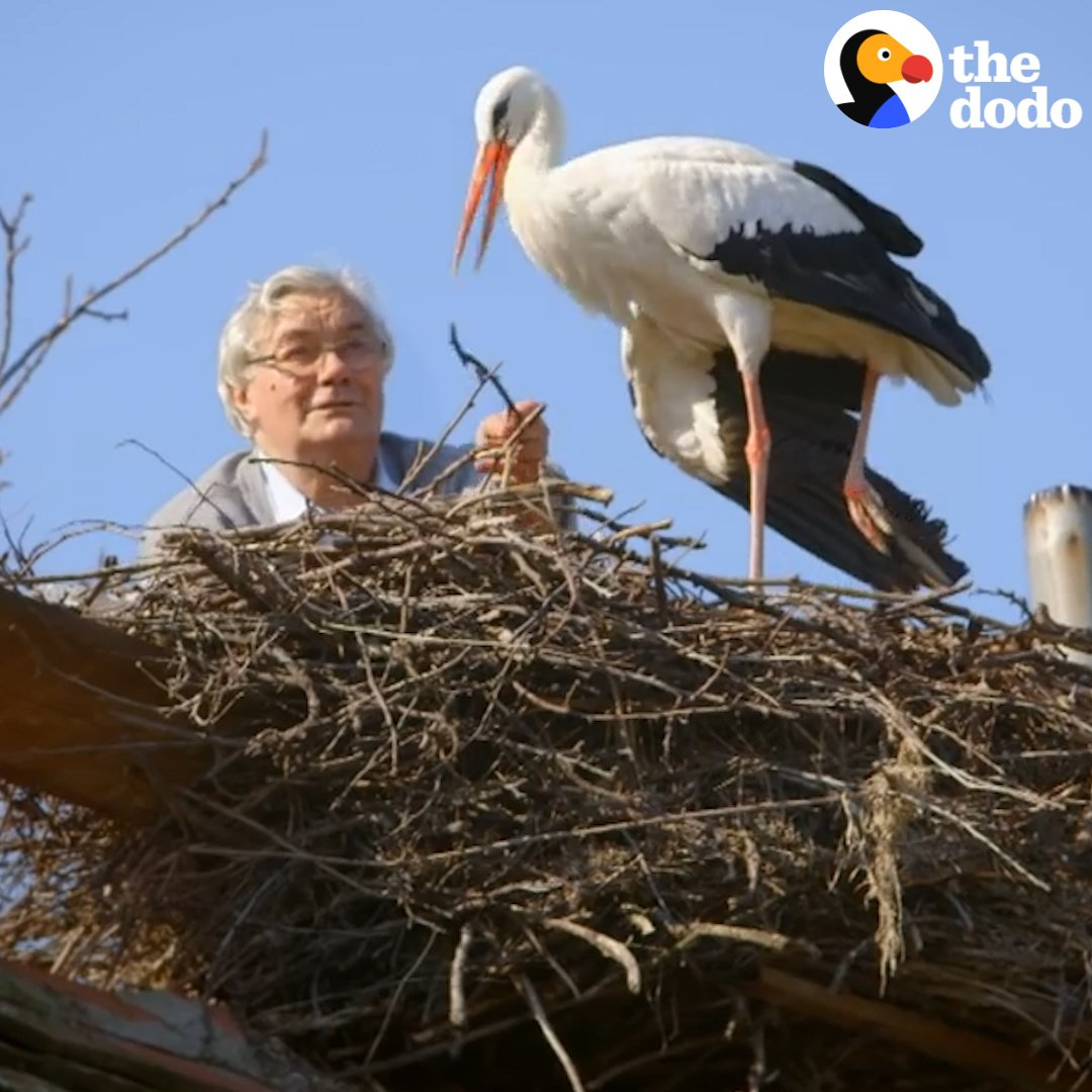 This guy's been taking care of this rescued stork named Malena for 25 years ❤️