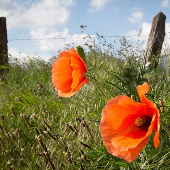 Whats on Appleby: From Westmorland to the Western Front