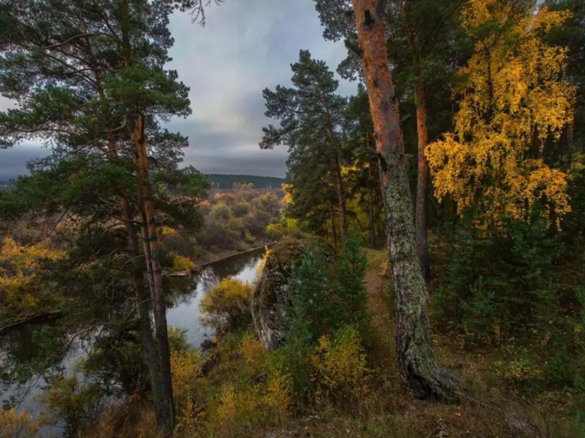 Уральский лес рисунок советуют