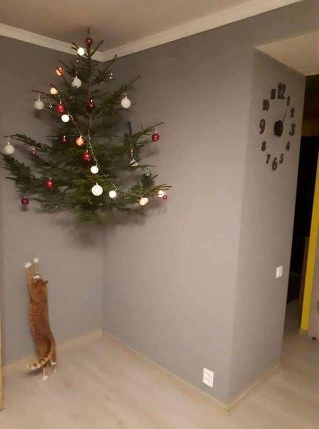 How To Cat Proof Your Christmas Tree.Catproof Your Christmas Tree This Season Cc Kittylexy