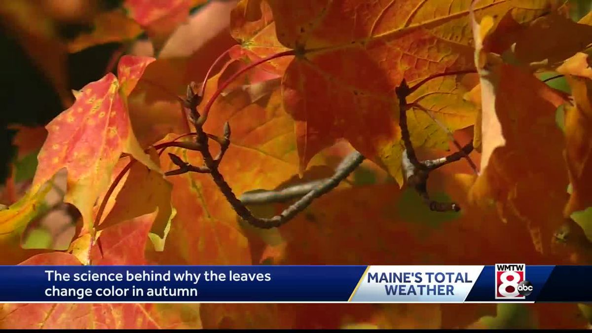 The science behind the beautiful fall colors https://t.co/7krEdlL9BD https://t.co/66tAzUXaor