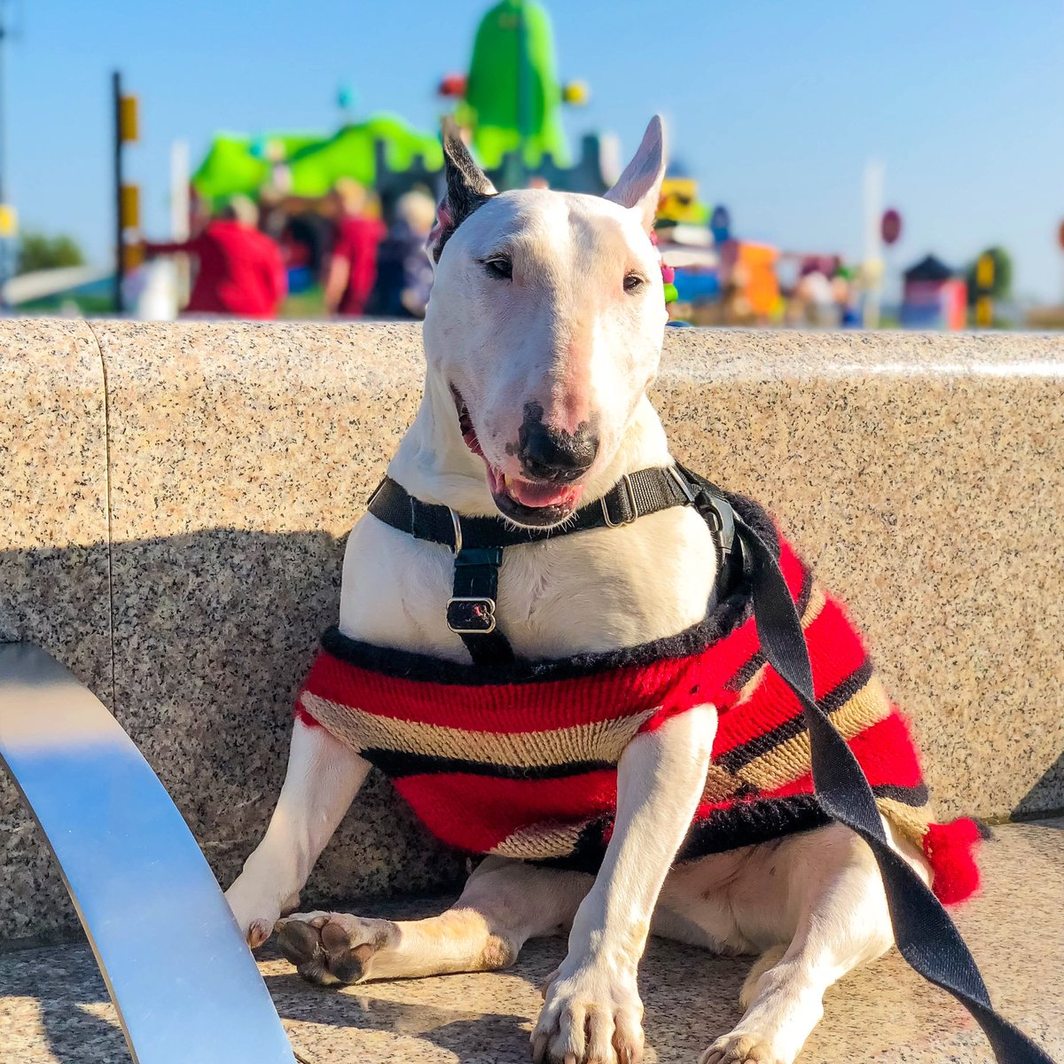 It's always sunny where I am  . . . . #greatyarmouth #yarmouth #norwich #dogs #dog #bullterrier #bullterriers #dogsoftwitter #dogsofinstagram #doggo #puppers #dogtravel #traveldog<br>http://pic.twitter.com/njO1Ono4KV