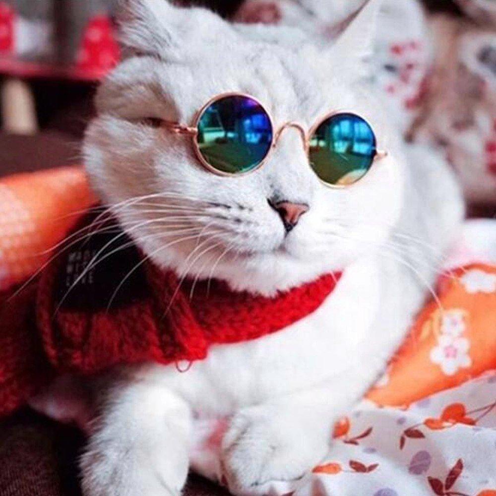 Крутые кошачьи картинки