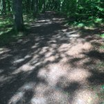 "Image for the Tweet beginning: Word of the day: ""dappled"""