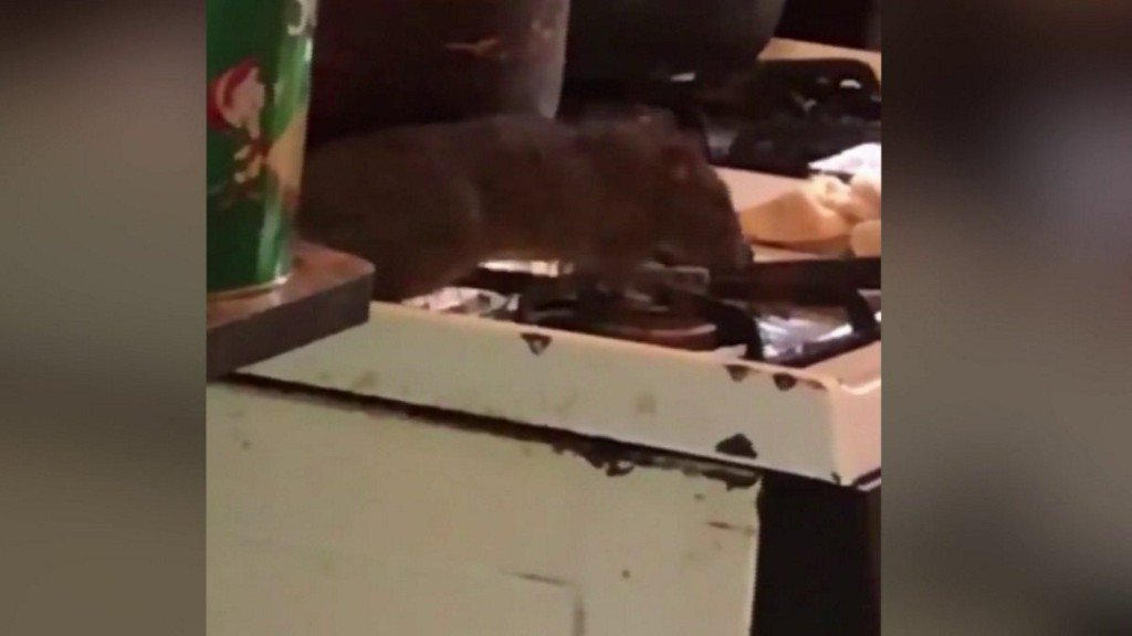 Disturbing Videos Show Giant Rats Taking Over NYC Apartment Building; Residents Demand Action https://t.co/uf6YEifep5