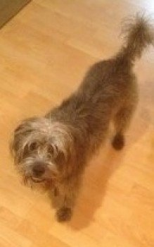 Lost: COCO Grey Cross Breed Female In #Thrapston #NN14 #scanme #missingdog @doglostuk #doglostuk #doglost  http://www. doglost.co.uk/dog-blog.php?d ogId=135732 &nbsp; … <br>http://pic.twitter.com/w34MTcybT4