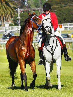 2007 Caulfield Cup @MelbRacingClub is a day I'll never forget. Having the fav in the race with Maldivian and the shock scratching at the barriers. The highs and lows of racing. He won the 2008 Cox Plate @TheValley 12 months later. Photo