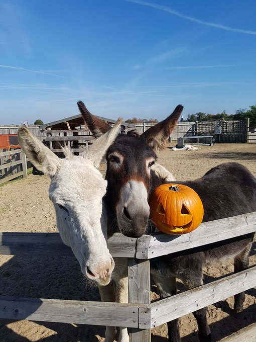 """HALLOWEEN HALF TERM AT THE FARM!"" begins from this Saturday. Treat the kids to some spooky fun, with monster mash discos, face-painting, pumpkin carving and win prizes! Find out more: https://t.co/7lFEMZAh1j https://t.co/kbEcDimn0n"