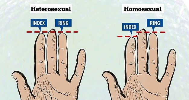 HOW GAY ARE YOUR HANDS? dailymail.co.uk/sciencetech/ar…